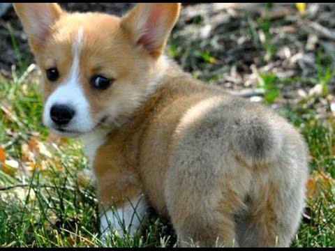 puppybutt!